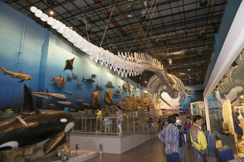 대왕고래 vs 거대공룡…자연계 최강자 해남서 가린다