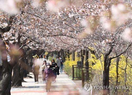 벚꽃 명소엔 띄엄띄엄 발길…꽃구경 대신 산·공원으로 봄나들이