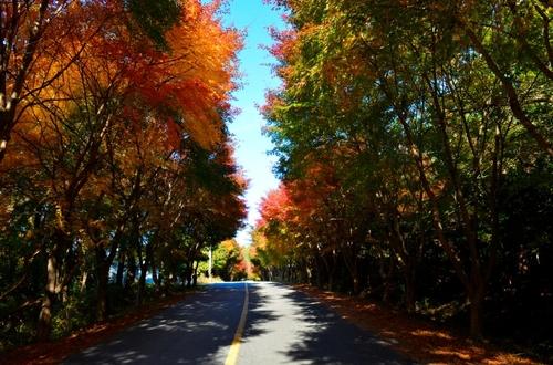 지는 단풍, 가을이 아쉽다면…이번 주말 완도 청산도로 가자