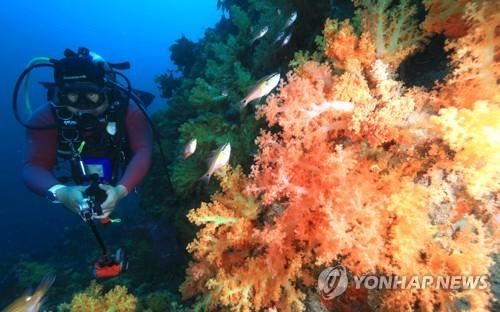 서귀포 문섬이 다이빙의 메카가 된 이유는