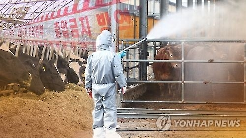 Gov't seeks emergency vaccine supply for FMD after confirming different type of virus - 1