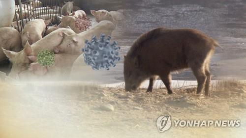 S. Korea reports 7 more African swine fever cases in wild boars