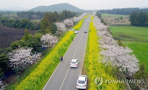 This undated file photo shows Noksan Road on Jeju Island. (Yonhap)
