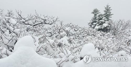 Mount Seorak in the northeastern province of Gangwon is covered with snow on April 30, 2021, in this photo provided by Seoraksan National Park Office. (PHOTO NOT FOR SALE) (Yonhap)