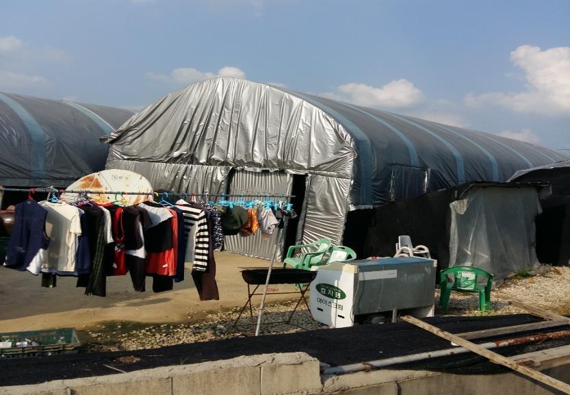 비닐하우스에서 사는 이주노동자들