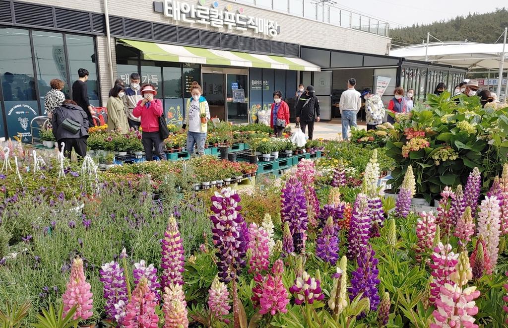 태안로컬푸드직매장 내 꽃시장 찾은 관광객