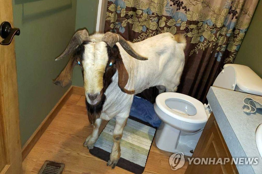 ODD Goat Break-In
