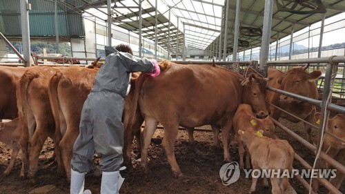 S. Korea to roll out vaccine against FMD by May