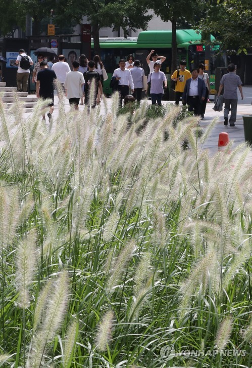 Fountain grass welcomes passersby to Cheonggye Plaza