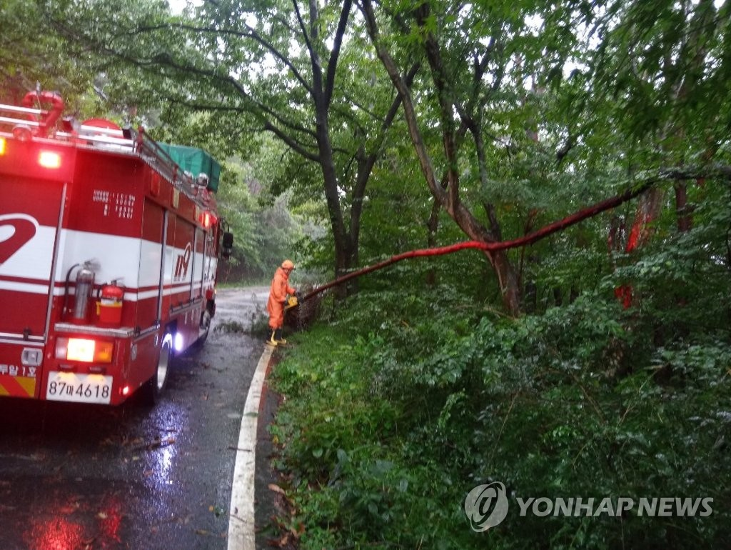 This photo, provided by the Gwangju Northern Fire Station, shows officers taking safety measures after Typhoon Bavi toppled a tree in the southwestern city on Aug. 26, 2020. (PHOTO NOT FOR SALE) (Yonhap)