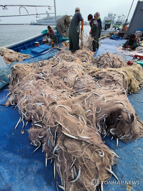 Big haul of sand lance in S. Korea