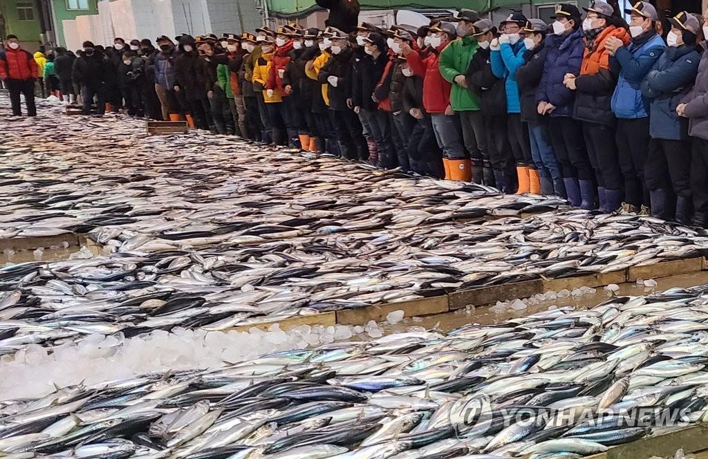 부산공동어시장 고등어 경매